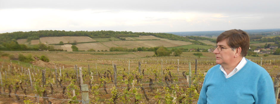 vignes-de-chardonnay-101-bis1